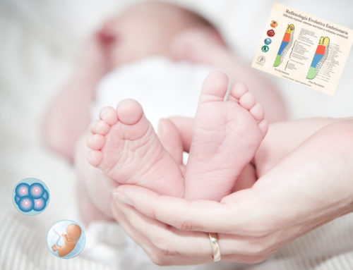 "Online directo "" Reflexologia Embrionaria"""